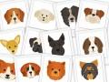 Image Main Dogs